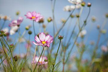 Feld mit Blumen von Esther Erkelens