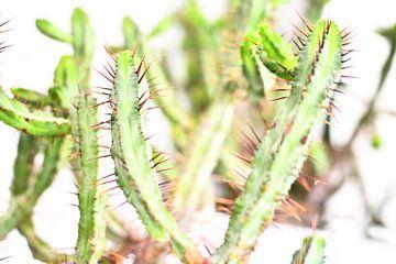 Grüne Pflanze I von Mathias Kuhn