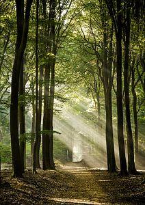 Het pad in het Speulderbos van