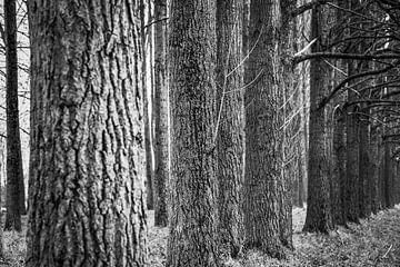 Die Bäume des Waldes von Edwin De smet