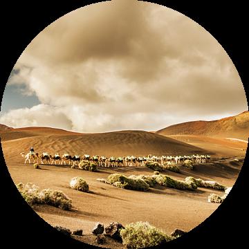Timanfaya kamelen van Harrie Muis