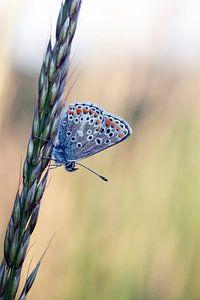 Schilderachtige foto van een mooie kleine vlinder