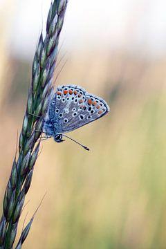 Schilderachtige foto van een mooie kleine vlinder van Maurice de vries