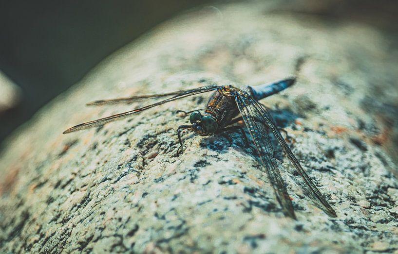 Dragon-Fly chillen op het strand van Jakob Baranowski - Off World Jack