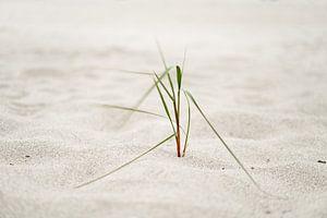 Strandgras im Seewind von Ralf Lehmann