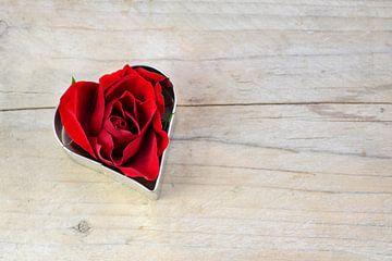 rote Rosenblüte in einer herzförmigen Keksform, Liebeskonzept für Valentinstag oder Muttertag auf ru von Maren Winter