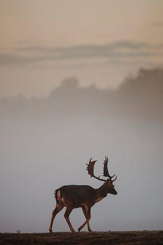 Hert in ochtendmist