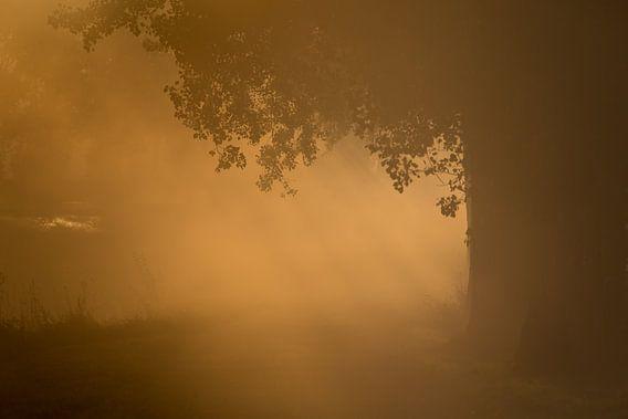 Eerste ochtend licht door de mist