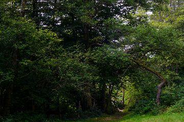 Sprookjesachtig bos van Michelle Van Den Berg