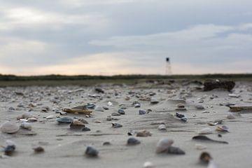 Schelpen op het strand von Mark Scholten