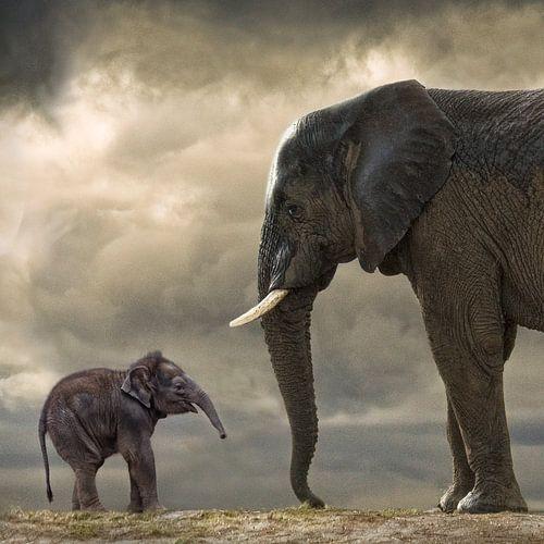 Baby olifant van Marcel van Balken