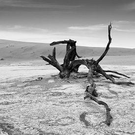 Totes Flachland in der Namib-Wüste, Namibia, Afrika von Tjeerd Kruse