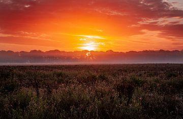 Le soleil se lèvera à nouveau sur Marjolein van Wikselaar