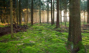 bos van Anne Koop