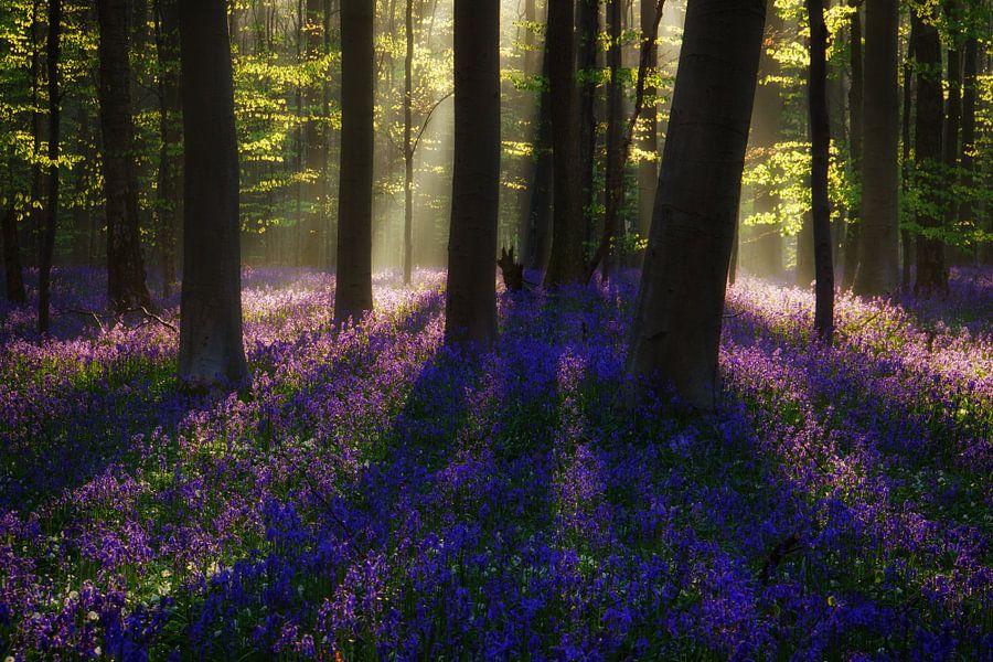 Bright Magic van Martin Podt