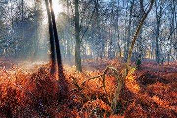 Dubbele boom zonsopkomst in het herfstbos von Dennis van de Water