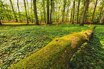 Oude dode boom in een beukenbos van Sjoerd van der Wal