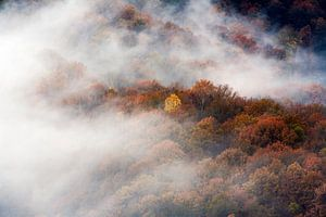Luchtfoto van mistige bossen in herfst kleuren