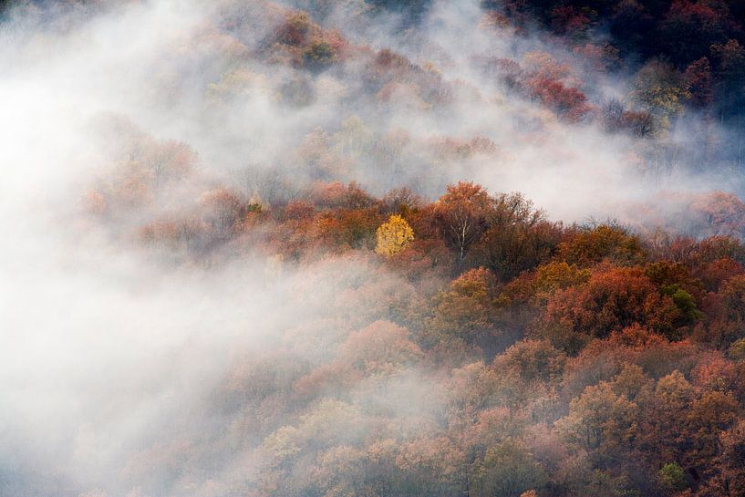 Luchtfoto van mistige bossen in herfst kleuren van Peter de Kievith Fotografie