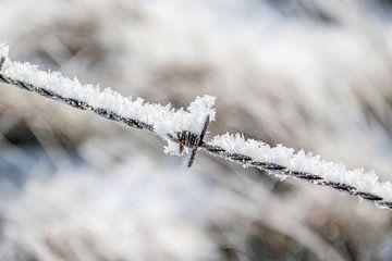 Stacheldraht bedeckt mit Frost von Kees Korbee