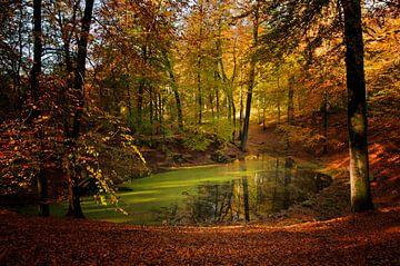 Herfst op de Veluwe sur Ellen Driesse