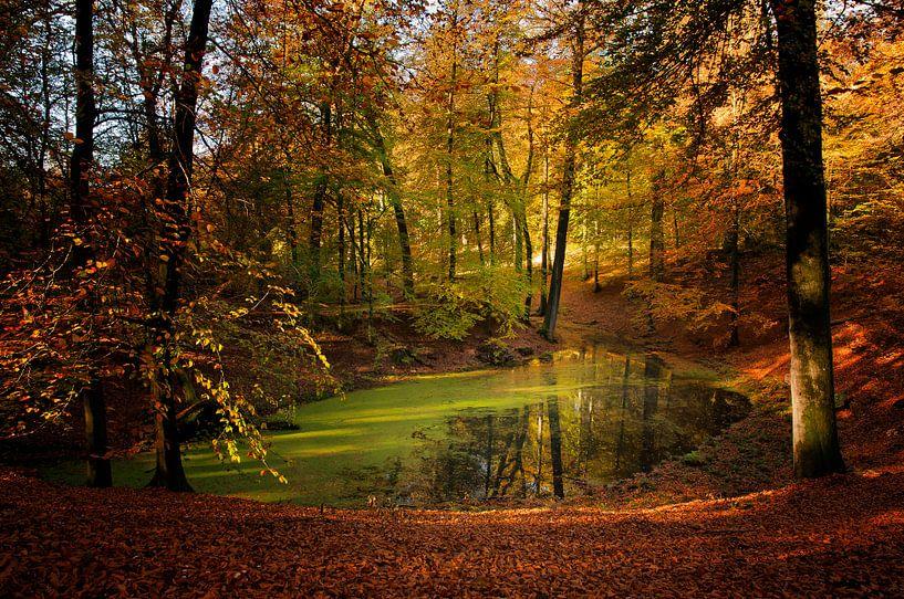 Herfst op de Veluwe van Ellen Driesse