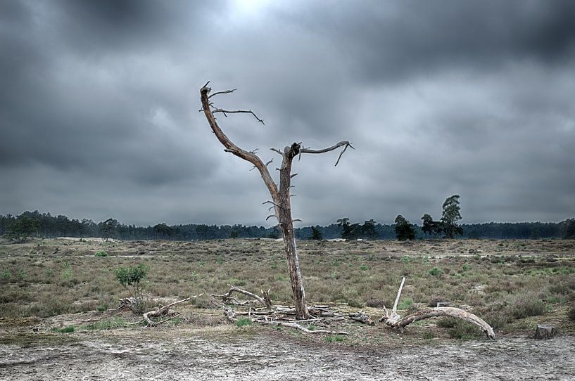 Eenzame boom van Jan Brand