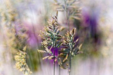 Gras von Rob Boon