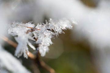 Het was koud buiten van T. van der Kolk