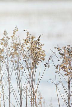 Sneeuw wereld veldbloemen van Anke Winters