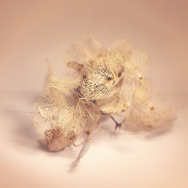 verdroogde schoonheid van Marianne Bras
