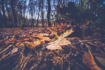 Eichenblatt auf dem Boden eines Herbstwaldes von Fotografiecor .nl