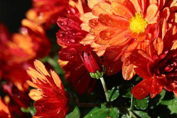 Chrysanthemen-Mosaik von Pim van der Horst