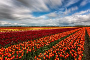 Rainbow Field von Cho Tang