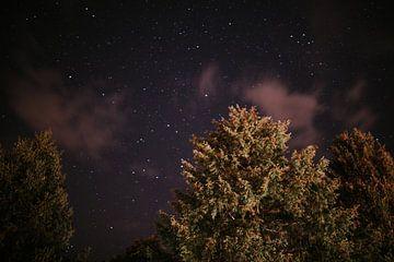 Baumwipfel mit klarem Sternenhimmel im Schwarzwald | Farbenfrohe Reisefotografie von Trix Leeflang