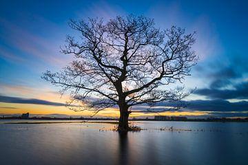 Überschwemmungsgebiete IJssel-Sonnenaufgang von Rick Kloekke