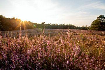 Heide zonsondergang in Warnsborn Arnhem van E.H. Efek