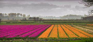 Kijkje op de tulpen van Peter Heins