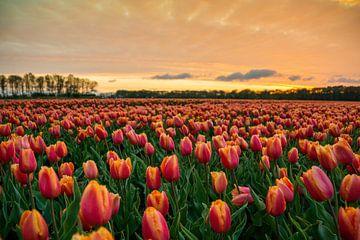 Zonsondergang nabij tulpenveld van Hanno de Vries