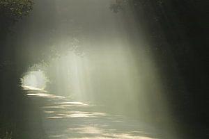 Een weg gevuld met zonnestralen