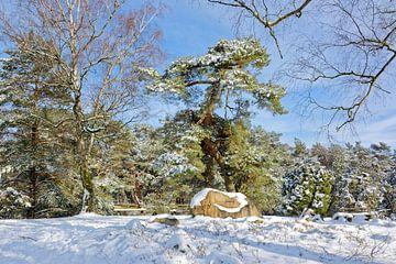 Winter bij het graf van Hermann Löns van Gisela Scheffbuch