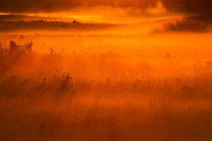 Mist graslandschap bij zonsopkomst van