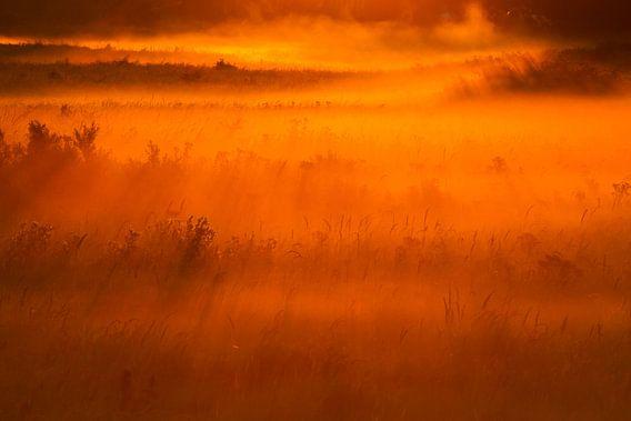 Mist graslandschap bij zonsopkomst
