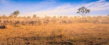 Buffalo Herd van Thomas Froemmel