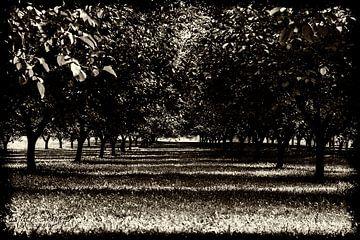 Walnotenboomgaard in de Dordogne von Esther Swaager ( Studio Toet)