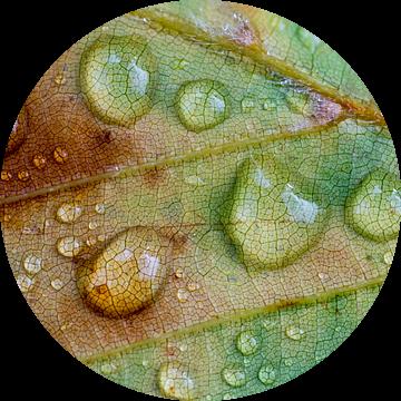 Regendruppels op een herfstblad van Birgitte Bergman