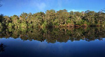 Baume reflection und Wasser von Ingrid Meuleman