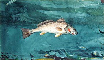 Kanalbass, Winslow Homer - 1904