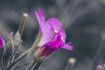 Oleander-Blume von Lili's Photography