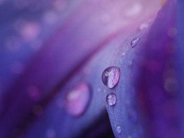 De schoonheid van regen van Christel Loman